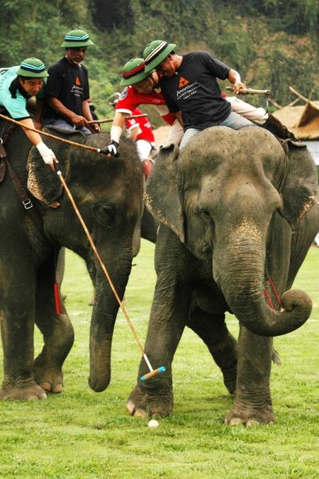 elephantpolo2